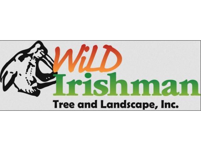 Wild Irishman Tree and Landscape - 1